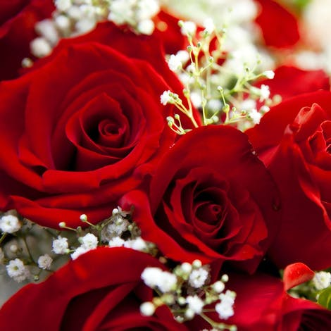 Beautiful detail of a dozen red roses